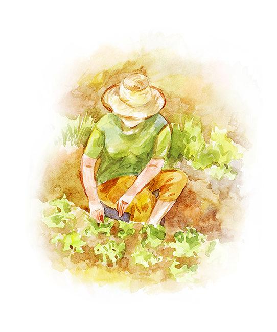 Для статьи о садоводстве